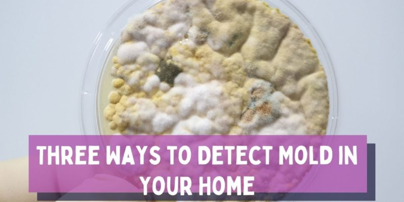 Three Ways to Detect Mold in Your Home