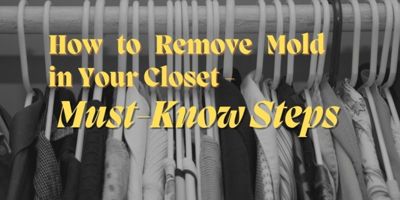How to Remove Mold in Your Closet - Must-Know Steps